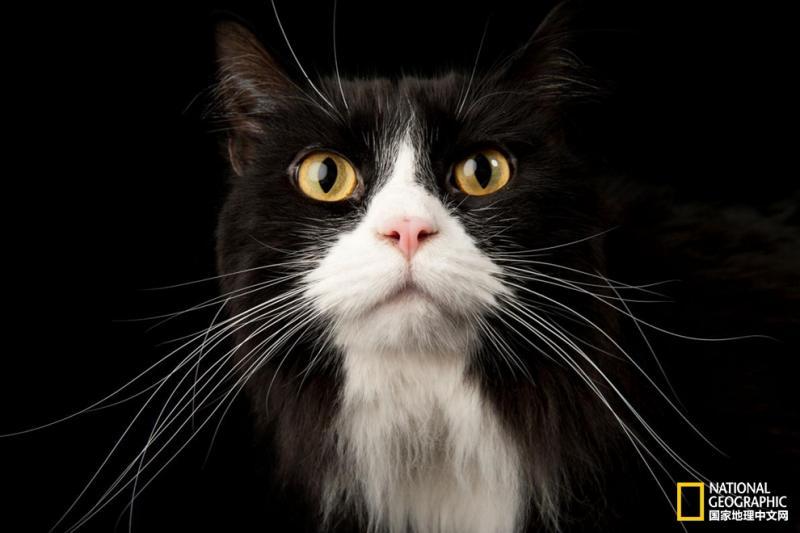宠物的心思你别猜,让专家来揭秘吧