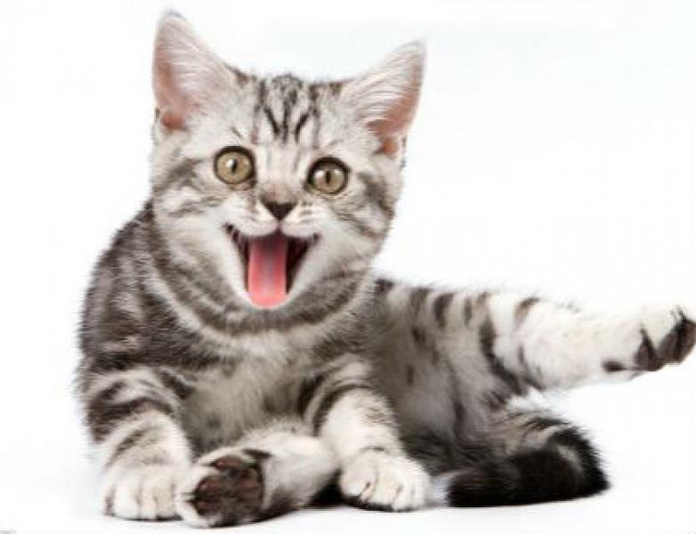 猫咪需不需要绝育? 为什么要绝育?猫咪绝育的好处和必要性!