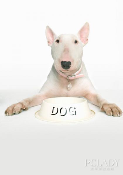 中毒宠物狗的各种急救知识