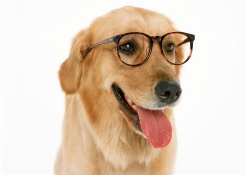【守望摄影工作室】作为一名合格的铲屎官,哪能不懂一些宠物摄影技巧呢?