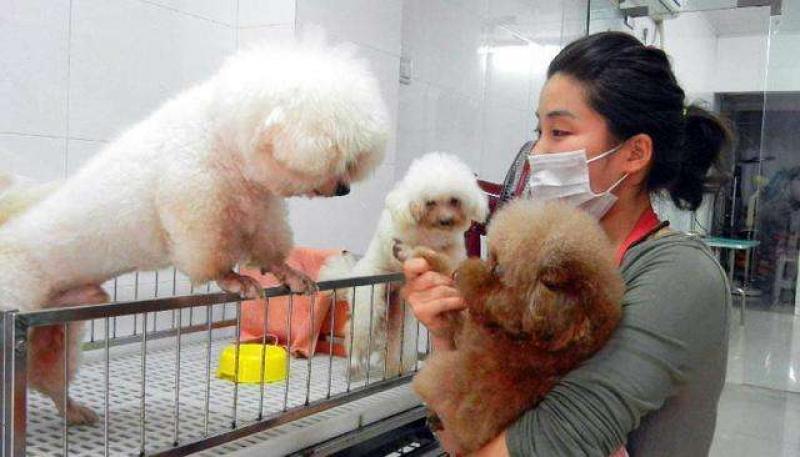 对于宠物寄养,我们应该注意些什么?