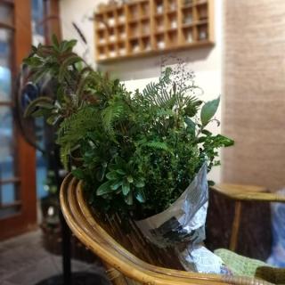 中华传统花艺经营服务: 插花培训 插花花艺