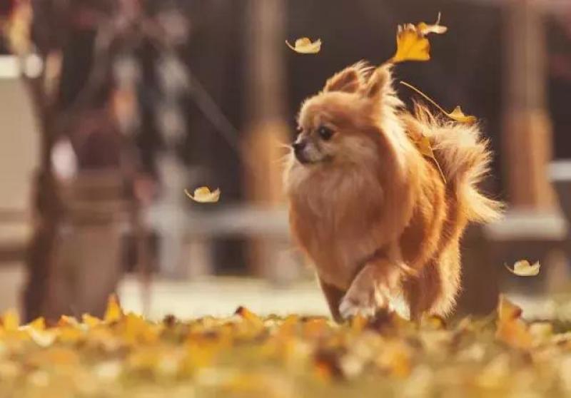 狗年宠物写真火爆,宠物摄影真的是暴利吗?