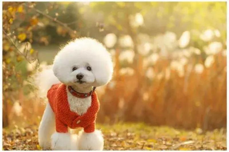 【广州乐贝宠物生活馆】狗年宠物写真火爆,宠物摄影真的是暴利吗?