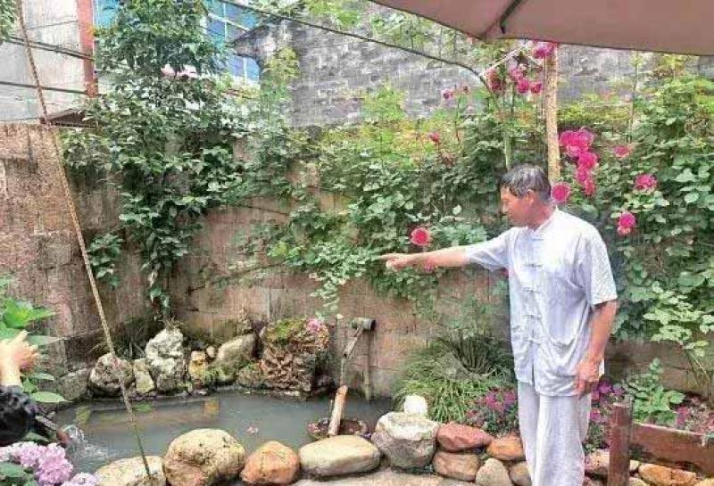 温州87岁老奶奶的玫瑰花园!8个子女为她打造,100多个品种