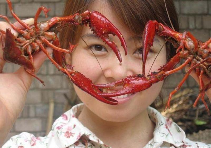 小龙虾价格大跌,养殖户或赔钱了,是否会造成明年小龙虾价格大幅上涨