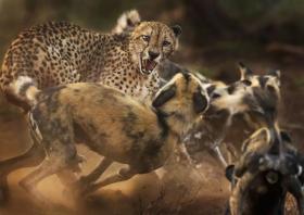 【妖娆少女长卷发】野生动物摄影奖的这8张照片,太有意思了,最后一张看哭了