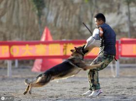 【萤火眠眠】世界上最凶悍的五种狗,战斗力都爆表