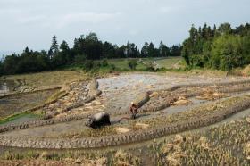 【十年萤火照君眠】占地100万亩,十多个民族共同修筑完成的红河哈尼梯田