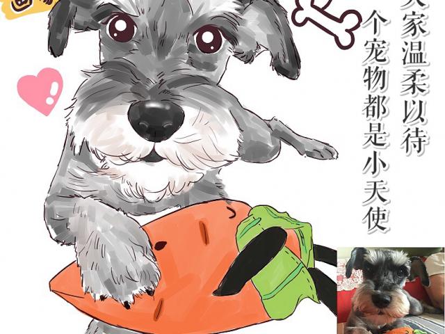 【达子工作室】宠物画像Q版卡通形象设计定制动物转手绘漫画插画头像肖像狗狗猫,技能专长>>图形动画>>宠物画像
