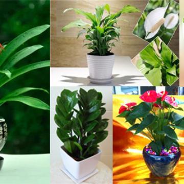 花卉租摆、上门服务、办公室绿植花卉租赁【上门服务】