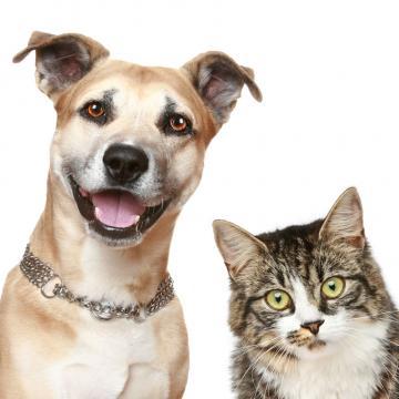 宠物摄影 宠物化妆  拍45张精修15张底片全送【守望摄影工作室|到店消费】