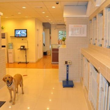 宠物寄养狗狗寄养猫咪寄养【广州乐贝宠物生活馆|到店消费】