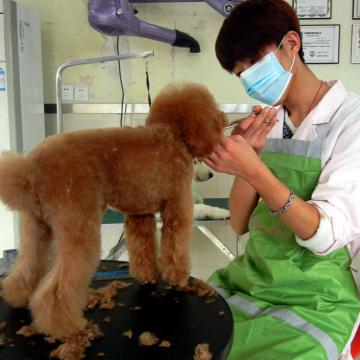 小型犬洗澡护理套餐【广州乐贝宠物生活馆|到店消费】