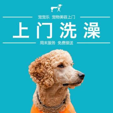 宠物美容 上门服务:5kg以下狗狗 洗澡 修剪造型 剃毛