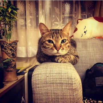 猫咪寄养 宠物家庭寄养 上门接送 包粮不关笼 绝育术后护理