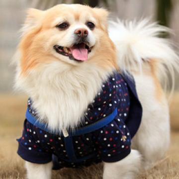 小型狗狗宠物洗澡护理上门服务套餐10KG以下【 巨小萌宠物狗狗服务店|上门服务】