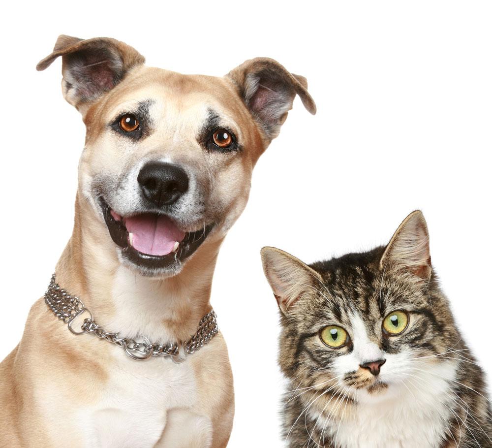 【守望摄影工作室】宠物摄影 宠物化妆  拍45张精修15张底片全送_技能专长>>摄影摄像>>宠物摄影