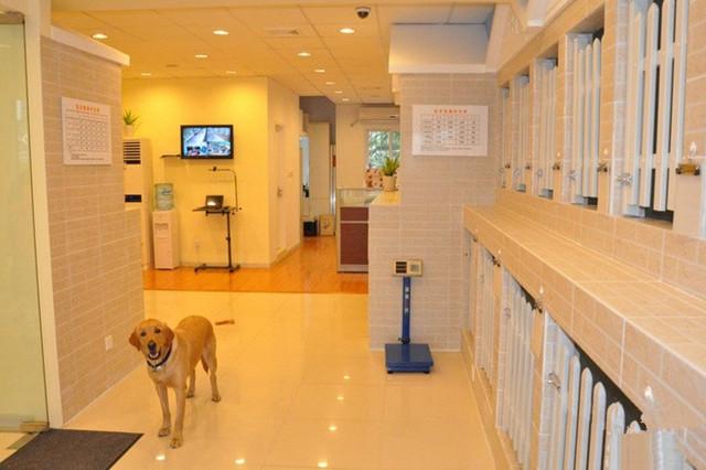 【广州乐贝宠物生活馆】宠物寄养狗狗寄养猫咪寄养_精彩生活>>宠物服务>>宠物托管