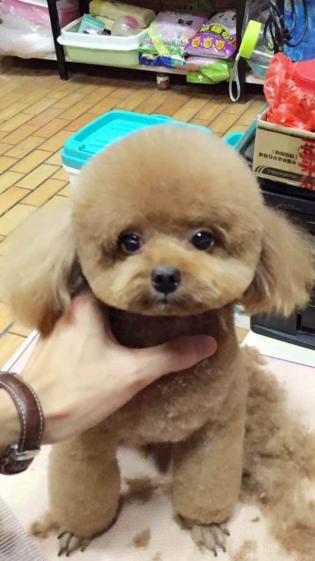 【广州乐贝宠物生活馆】小型犬洗澡护理套餐_精彩生活>>宠物服务>>宠物护理